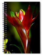 Vibrantly Rich In Red Spiral Notebook
