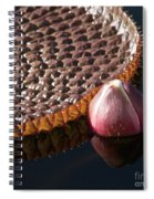 Victoria Amazonica Giant Water Lily Spiral Notebook