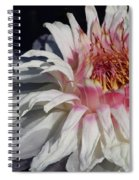 Victoria Water Lily Spiral Notebook