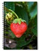 Vine Ripened Strawberry Spiral Notebook