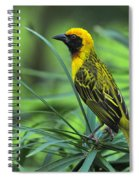 Vitelline Masked Weaver Spiral Notebook