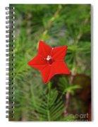Vivid Star Spiral Notebook