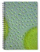 Volvox Globator Surface View Of Colony Spiral Notebook