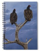 Vultures Perched On A Branch No.0022 Spiral Notebook