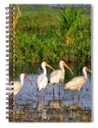 Wading Ibises Spiral Notebook