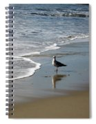 Waiting For Lunch On Shore Spiral Notebook