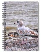 Waiting Gull Spiral Notebook