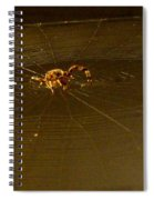 Waiting Spider Spiral Notebook