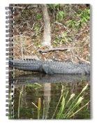 Wakulla Springs Alligator Spiral Notebook