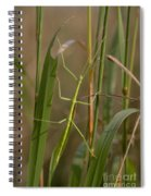 Walking Stick Insect Spiral Notebook
