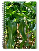 Walking Through The Cornfields Spiral Notebook