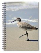 Walking Willet Spiral Notebook