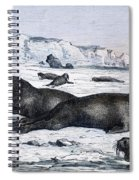 Walruses On Ice Field Spiral Notebook