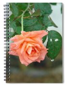 Water Dripping From A Peach Rose After Rain Spiral Notebook
