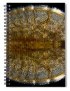 Water Penny Beetle Larva Spiral Notebook