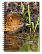 Water Vole At Dusk Spiral Notebook