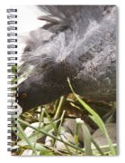 Waterhen Coot On Nest With Eggs Spiral Notebook