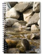 Watering Hole Spiral Notebook