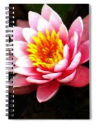 Waterlily On Pond Spiral Notebook