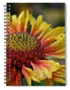Waterlogged Arizona Apricot Spiral Notebook