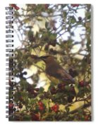 Wax Wing In A Berry Tree  Spiral Notebook