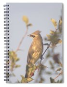 Wax Wing In Sunshine  Spiral Notebook
