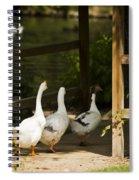 We Three Walk In A Row Spiral Notebook