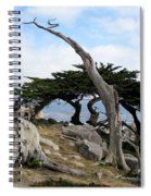 Weathered Tree On California Coast Spiral Notebook