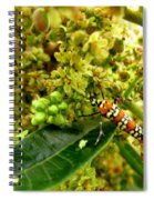 Webworm Moth Spiral Notebook