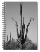 Weird Giant Saguaro Cactus In Black And White Spiral Notebook