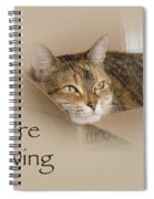 We're Moving Notification Greeting Card - Lily The Cat Spiral Notebook