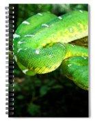 West Amazonian Emerald Tree Boa Spiral Notebook