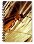 Western Corn Rootworm Beetle Spiral Notebook