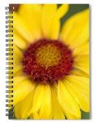 Western Daisy Glacier National Park Spiral Notebook