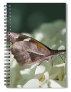What A Schnoz On That American Snout Butterfly Spiral Notebook