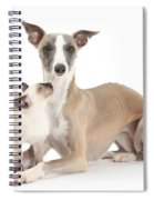 Whippet And Siamese Kitten Spiral Notebook