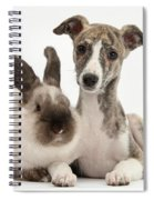 Whippet Pup With Colorpoint Rabbit Spiral Notebook