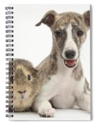 Whippet Pup With Guinea Pig Spiral Notebook