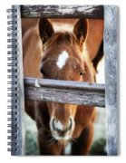 Whiskers 1 Spiral Notebook