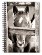 Whiskers 2 Spiral Notebook