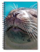 Whiskers Of A Seal Spiral Notebook