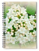 White And Cream Hydrangea Blossoms Spiral Notebook