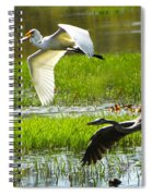 White And Grey Herons In Flight Spiral Notebook