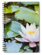 White And Pink Water Lily Spiral Notebook