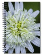 White Aster Spiral Notebook