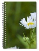 White Aster Wildflower Spiral Notebook