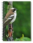 White-browed Sparrow-weaver Spiral Notebook