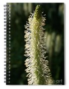 White Canadian Burnet Spiral Notebook