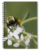 White Crownbeard Wildflowers Pollinated By A Bumble Bee With His Bags Packed Spiral Notebook