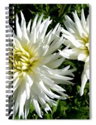 White Dahlias In Autumn  Spiral Notebook